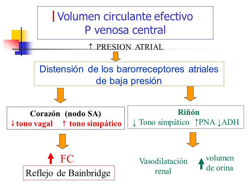 Sistema cardiovascular: - ppt descargar