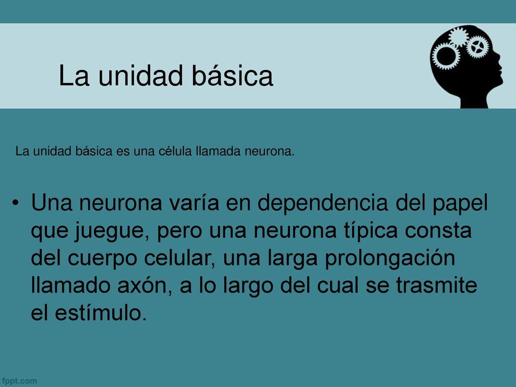 Sistema Nervioso Anatomía y Fisiología del Ministerios de Salud ...