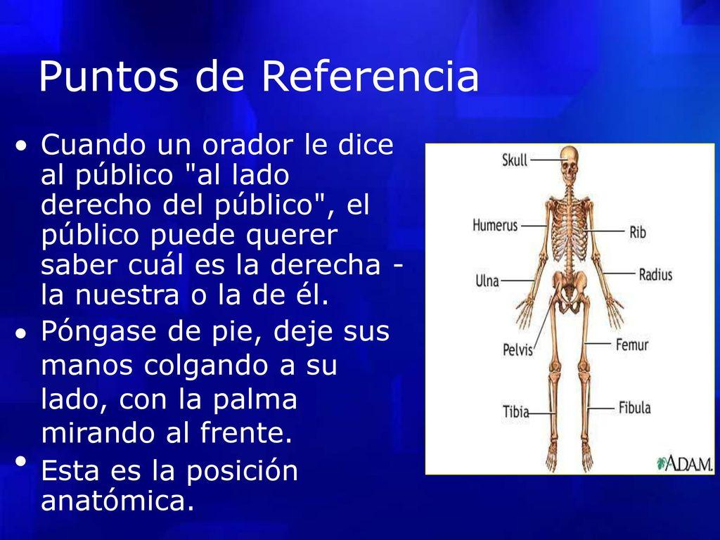 Términos Anatómicos. - ppt descargar