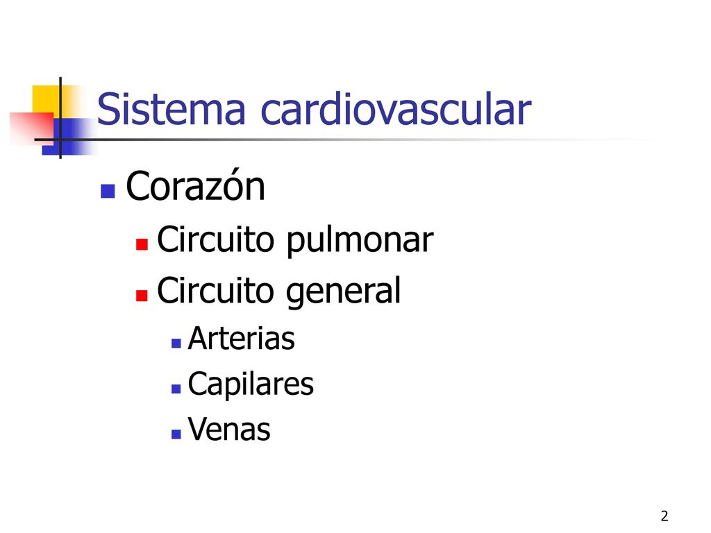 Circuito General : 11: sistema circulatorio ppt descargar