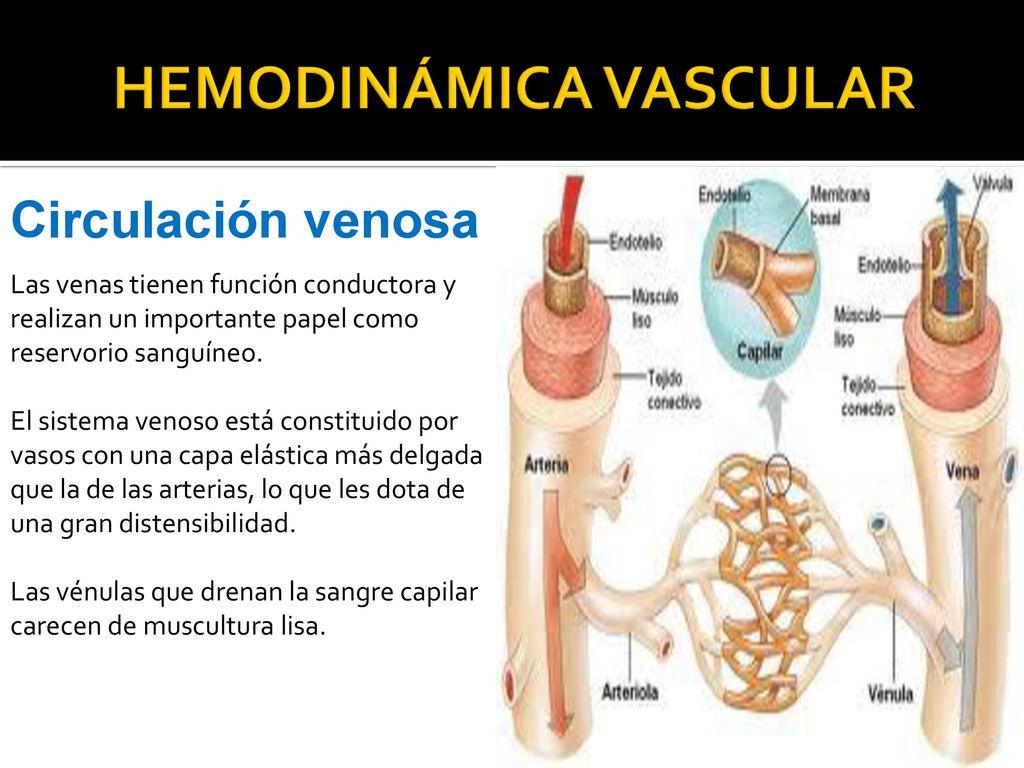 TUTORIAL Nº 4 SISTEMA CARDIOVASCULAR – CICLO CARDÍACO - HEMODINÁMICA ...