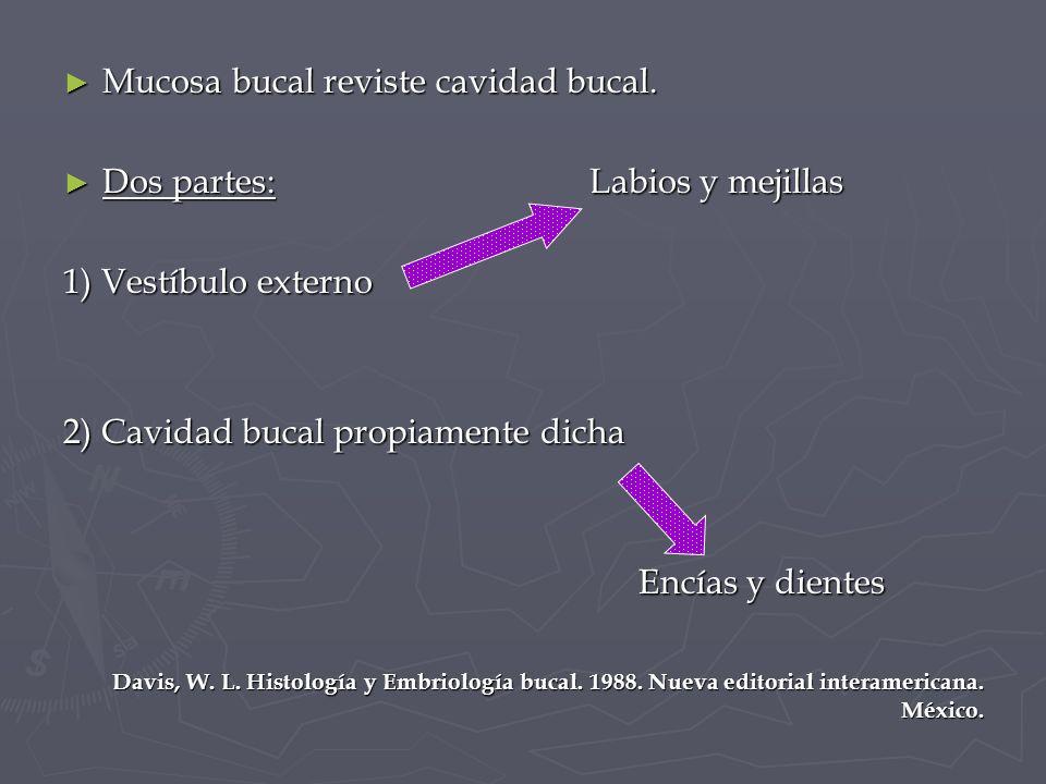 Histología Y Embriología Bucal Mucosa Bucal Ppt Video