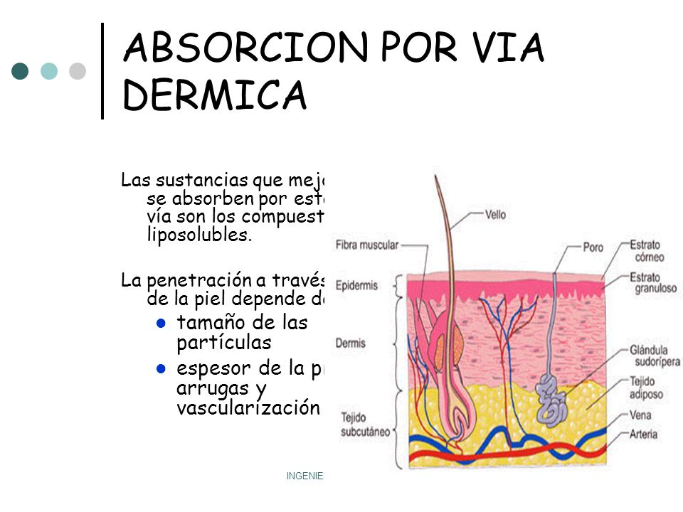 ABSORCION POR VIA DERMICA