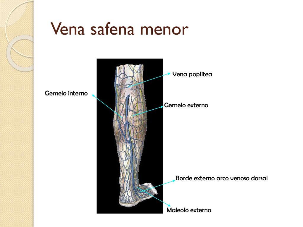 Universidad Autónoma De San Luis Potosí Facultad De Estomatología ...