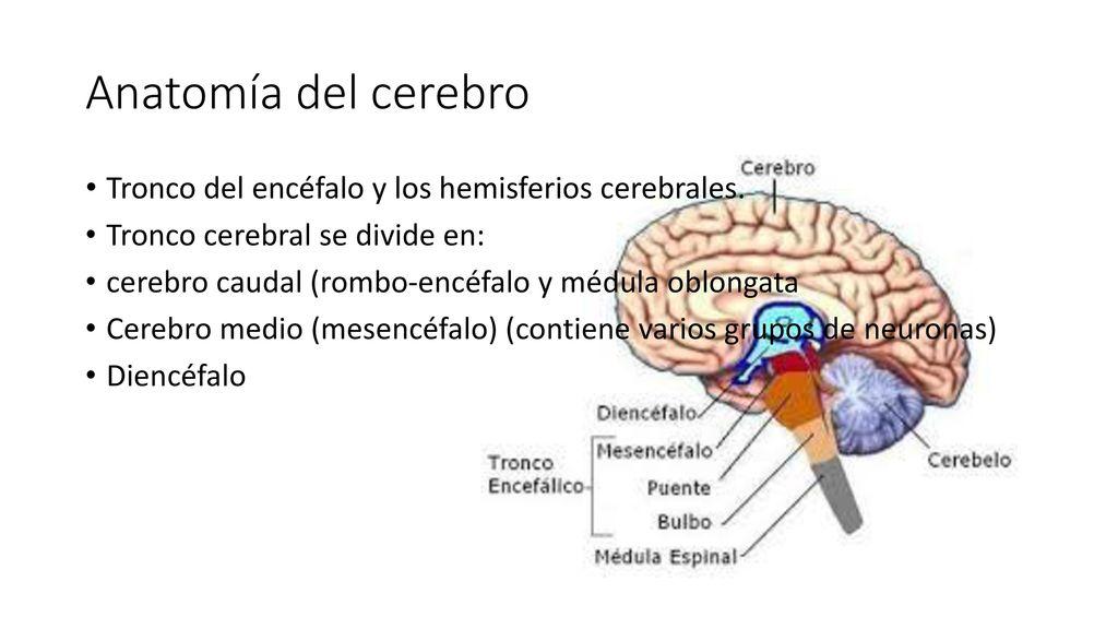Qué es la psicología?. - ppt descargar