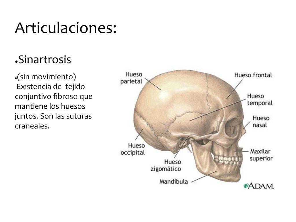Excepcional Hueso Nasal Anatomía X Ray Friso - Imágenes de Anatomía ...