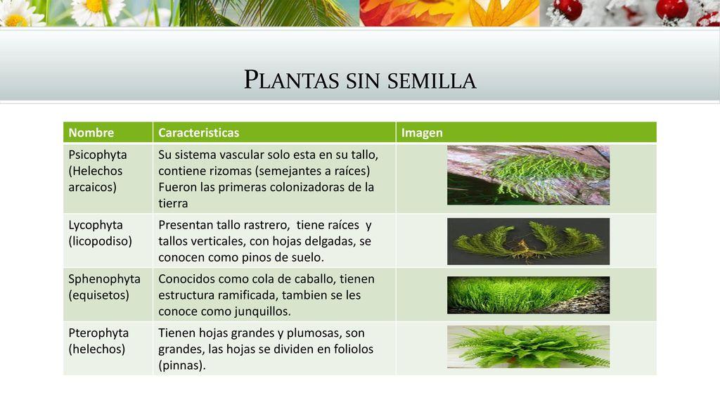 Plantas vasculares y no vasculares autor lb ppt descargar for Plantas sin semillas