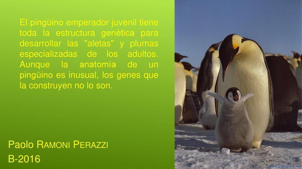 EVOLUCIóN Y DESARROLLO - ppt descargar