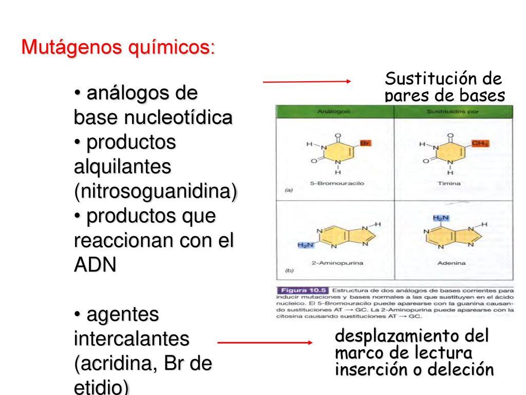 MUTACIÓN: modificación heredable en la secuencias de bases de un ...