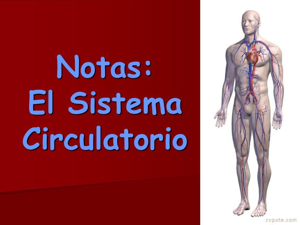 Notas: El Sistema Circulatorio - ppt descargar