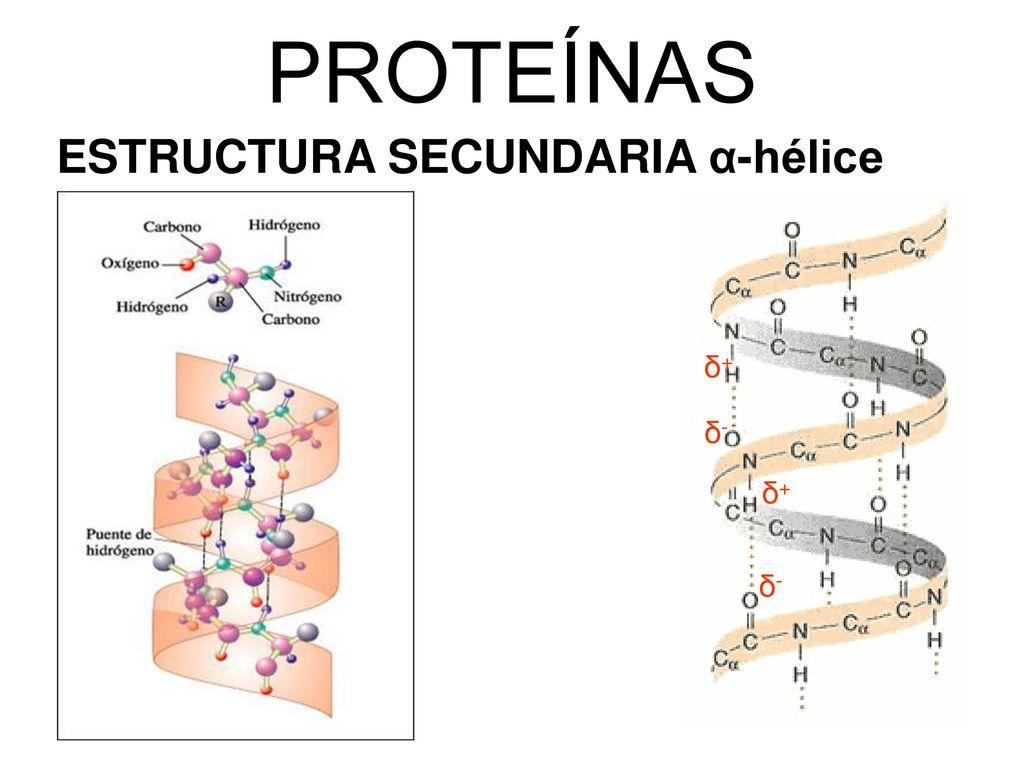 Unidad 6 Proteínas Ppt Descargar