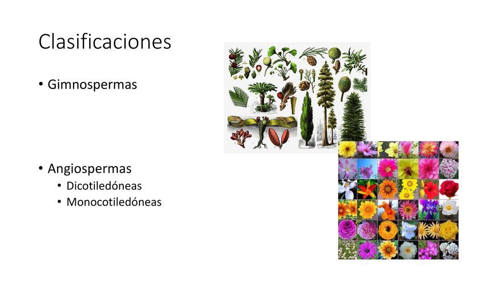 Anatomía de Plantas Superiores - ppt descargar