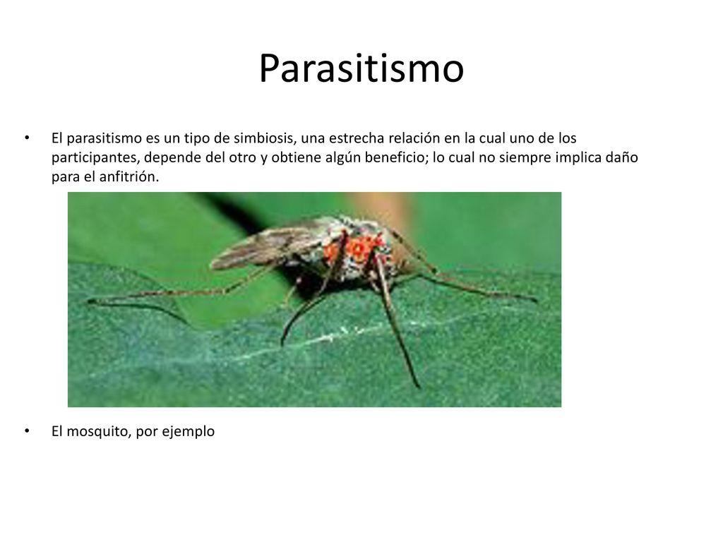 ejemplos de parasitismo interespecifica