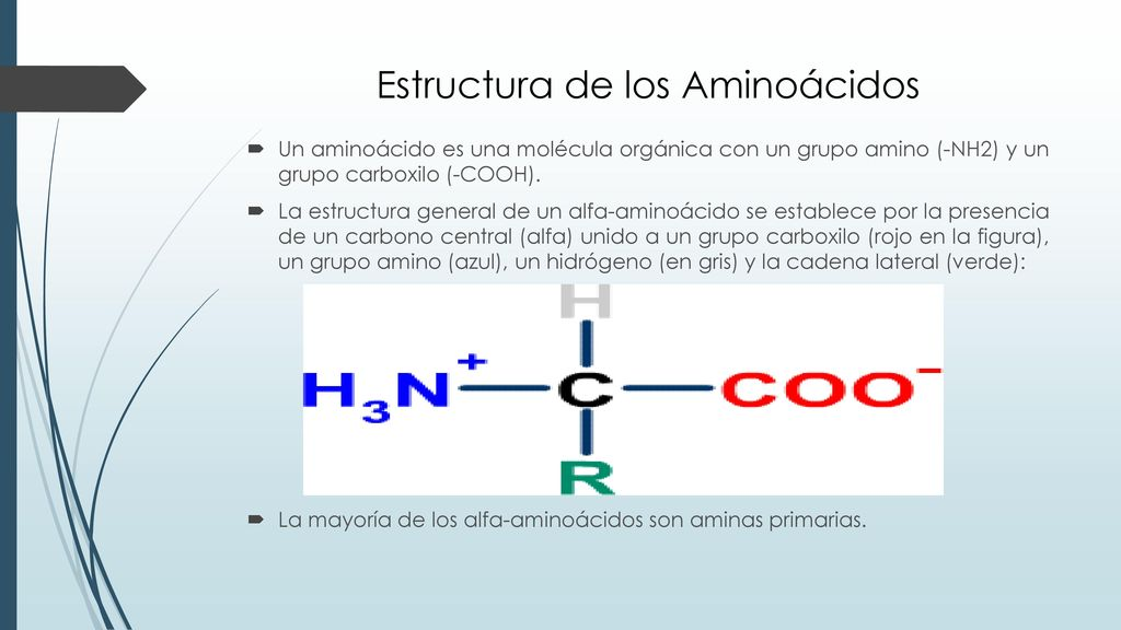 Aminoácidos Péptidos Y Proteínas Ppt Descargar
