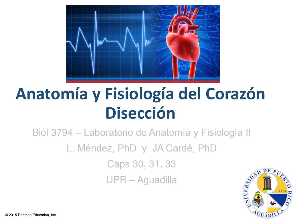 Único Anatomía Y Fisiología Humana Pearson Powerpoint Ornamento ...