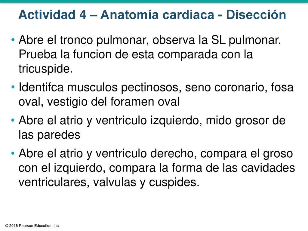 Anatomía y Fisiología del Corazón Disección - ppt descargar