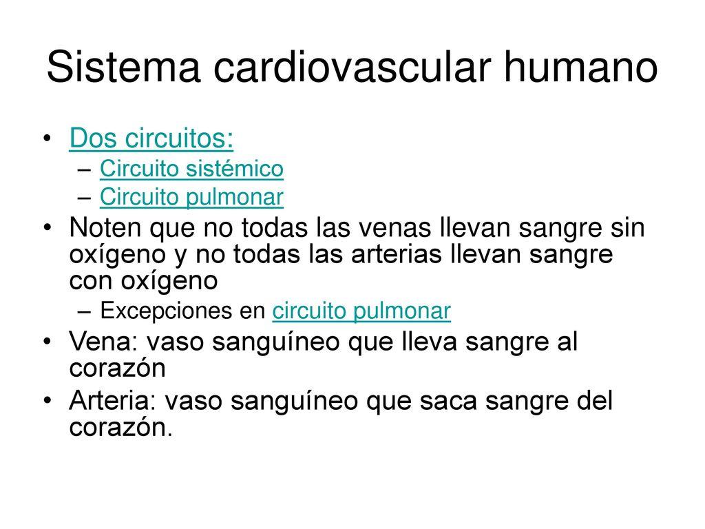 Circuito Sanguineo : Sistema circulatorio. ppt descargar