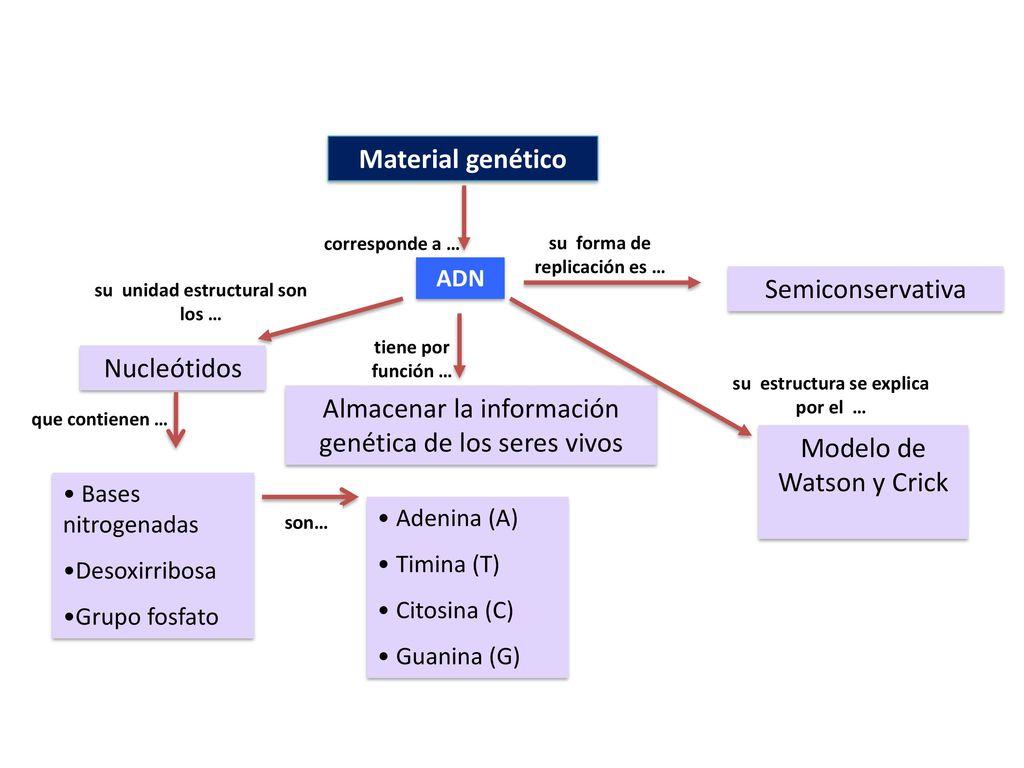 Almacenar La Información Genética De Los Seres Vivos Ppt