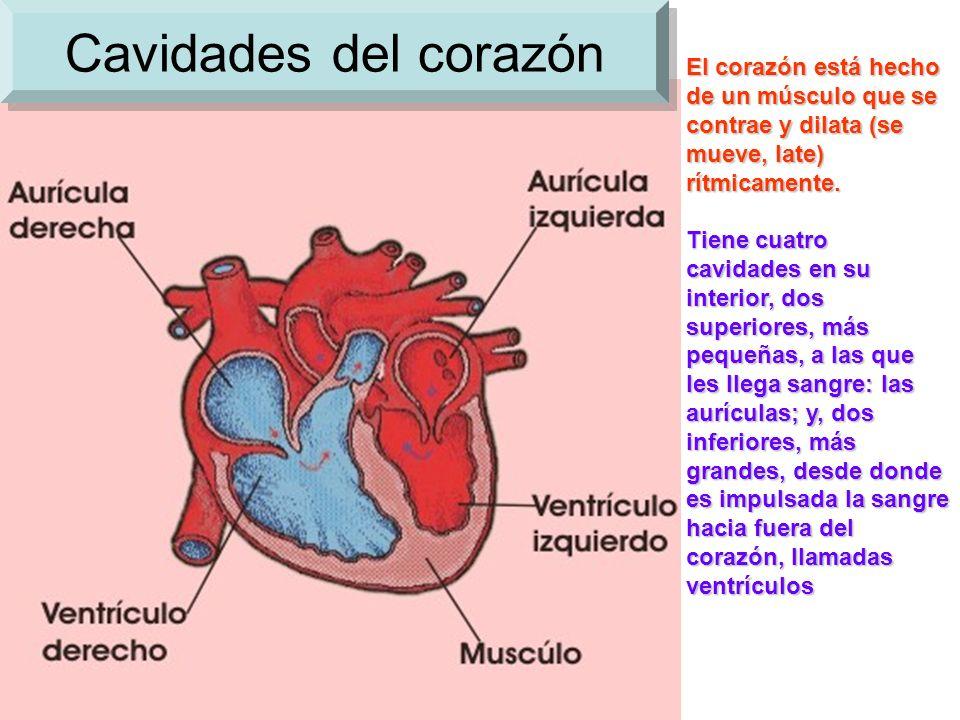 El Aparato Circulatorio - ppt video online descargar