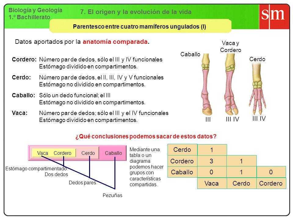6. La biodiversidad Biología y Geología 1.º Bachillerato ESQUEMA ...