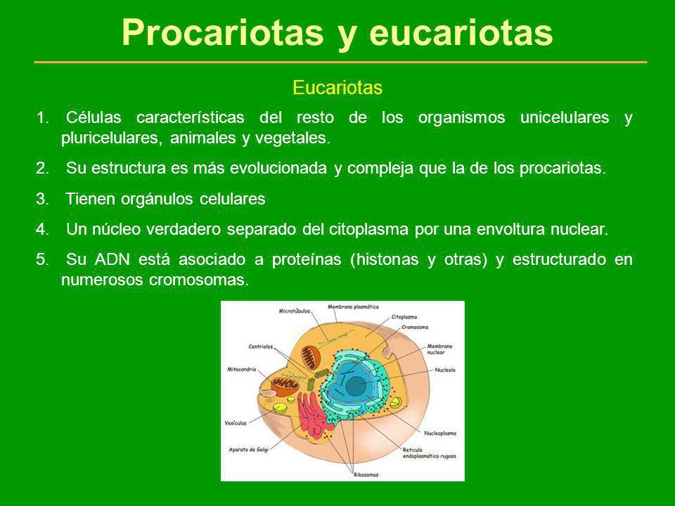 Células procariotas y eucariotas - ppt video online descargar
