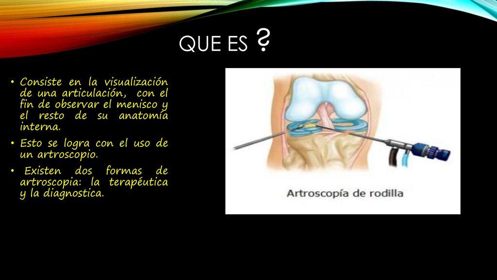 Atractivo Bsc En La Anatomía Elaboración - Imágenes de Anatomía ...