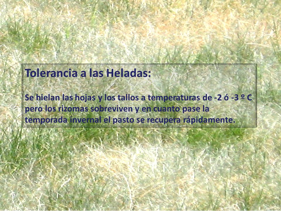 Tolerancia a las Heladas: