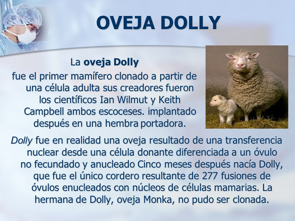 OVEJA DOLLY