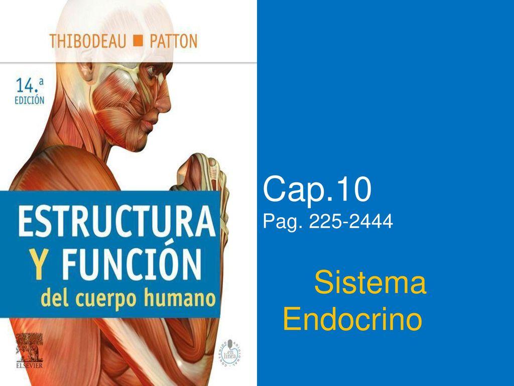 Cap.10 Pag Sistema Endocrino. - ppt descargar