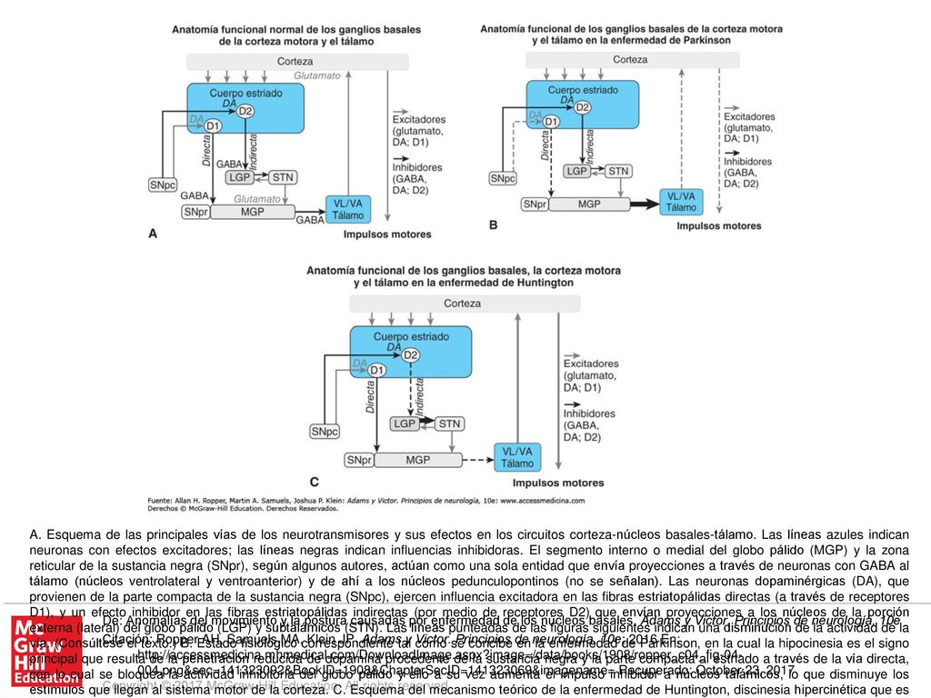 250df043ce 1 A. Esquema de las principales vías de los neurotransmisores y sus efectos  en los circuitos corteza-núcleos basales-tálamo. Las líneas azules indican  ...