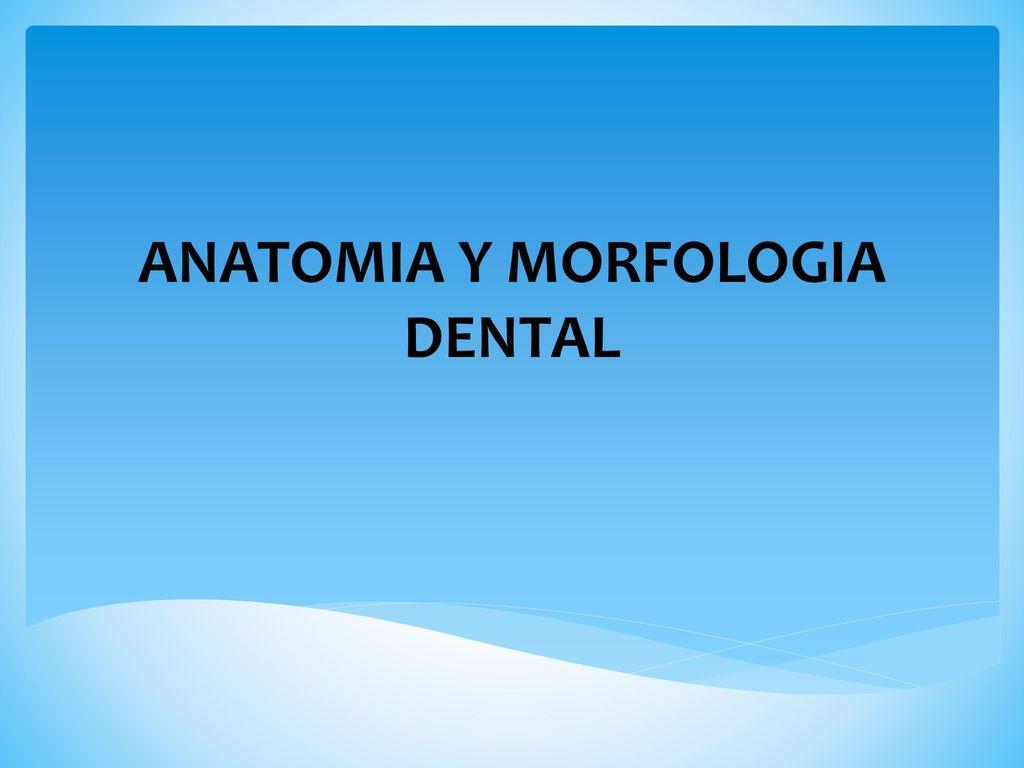ANATOMIA Y MORFOLOGIA DENTAL - ppt descargar