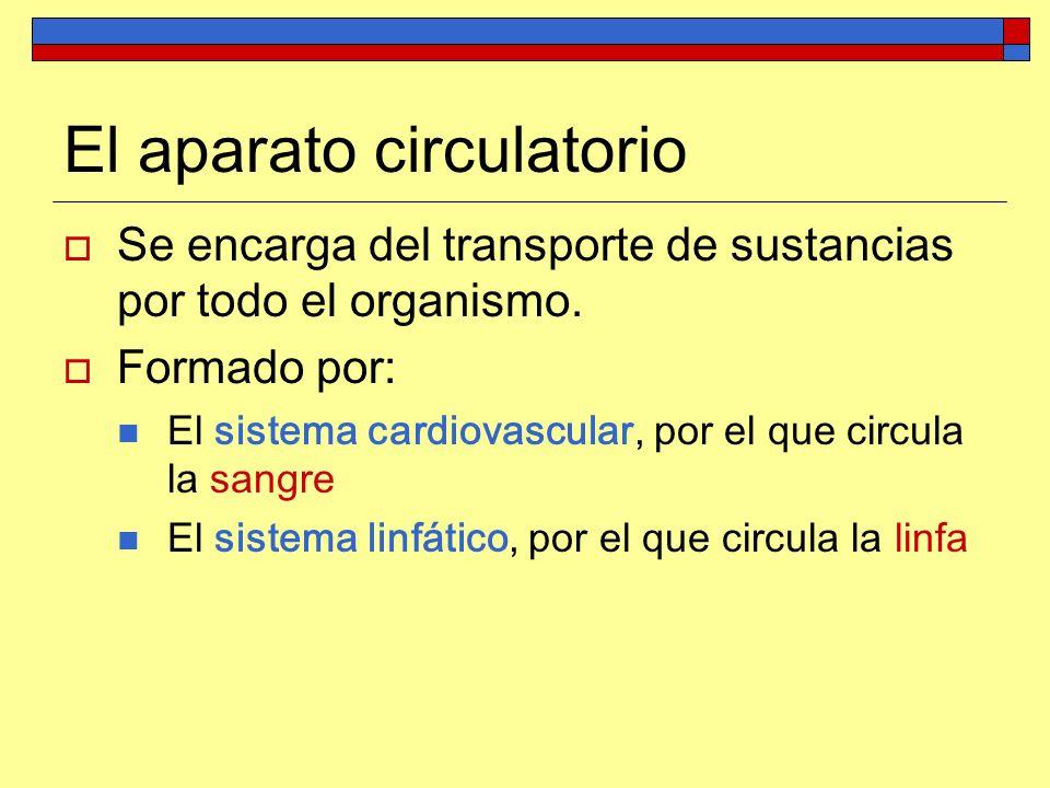 Tema 5: Anatomía y fisiología del aparato circulatorio - ppt video ...