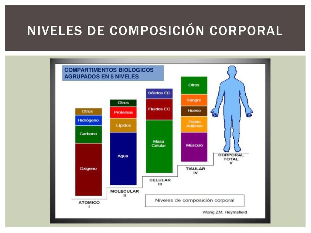 Resultado de imagen de niveles teóricos de composicion corporal