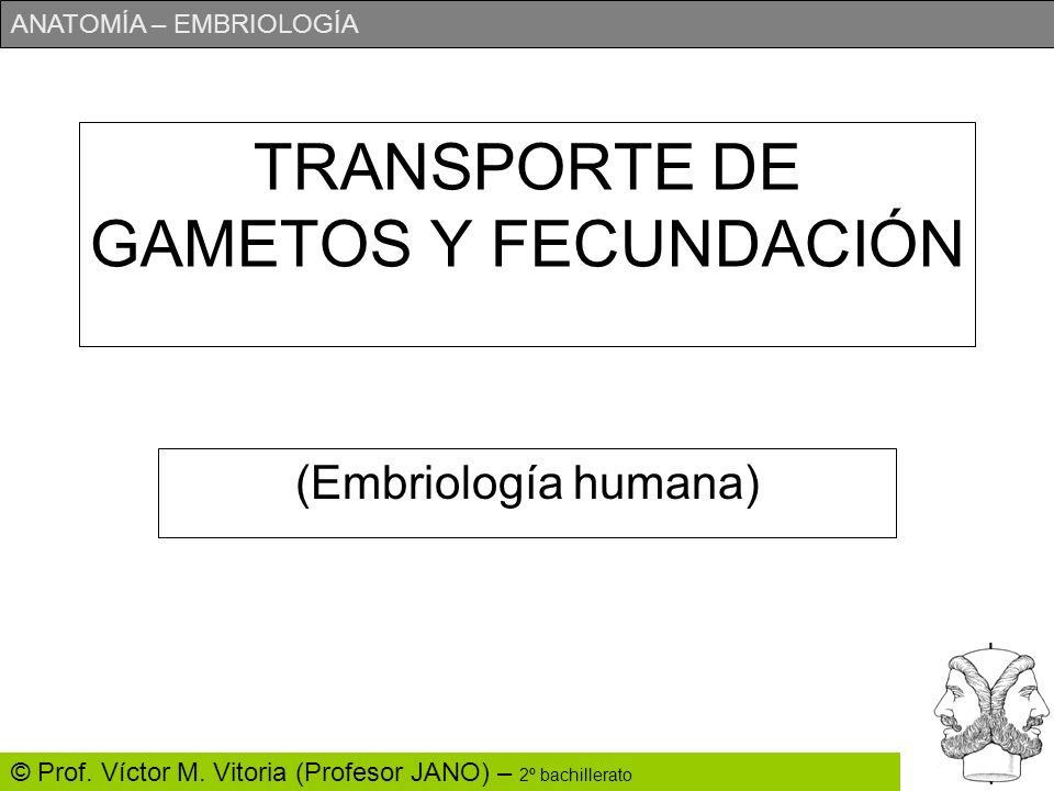 TRANSPORTE DE GAMETOS Y FECUNDACIÓN