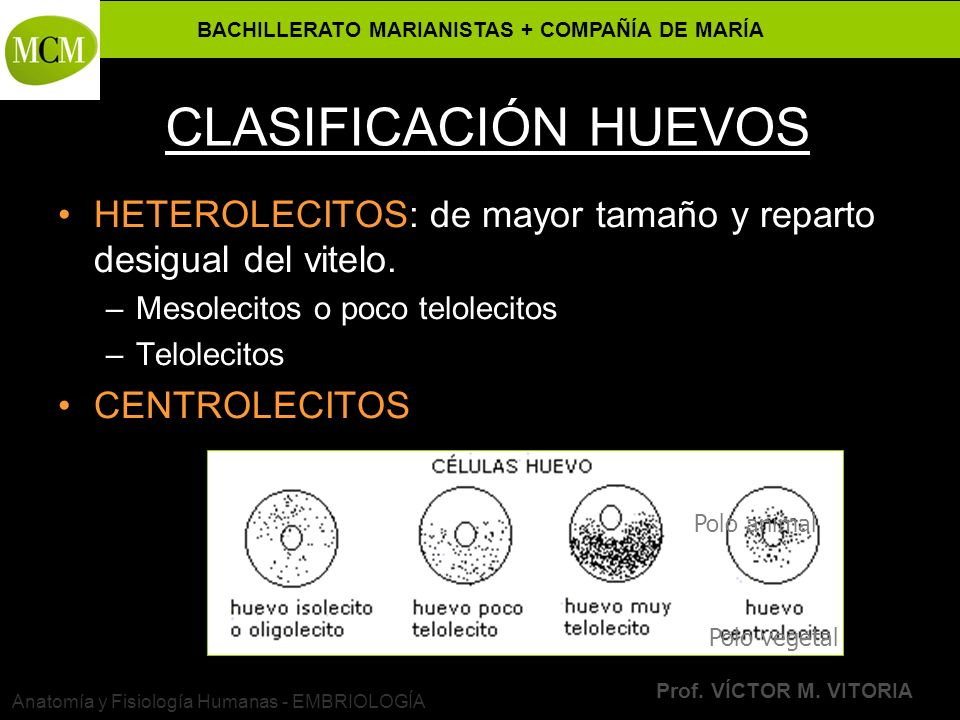INTRODUCCIÓN A LA EMBRIOLOGÍA - ppt video online descargar