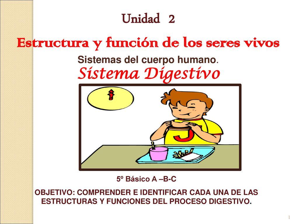 Único Estructura Del Sistema Digestivo Regalo - Anatomía de Las ...