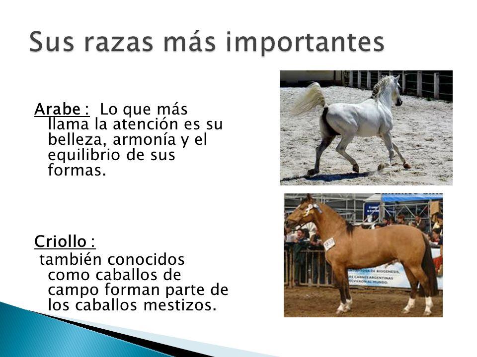 Lujo Anatomía Interna De Un Caballo Bosquejo - Imágenes de Anatomía ...