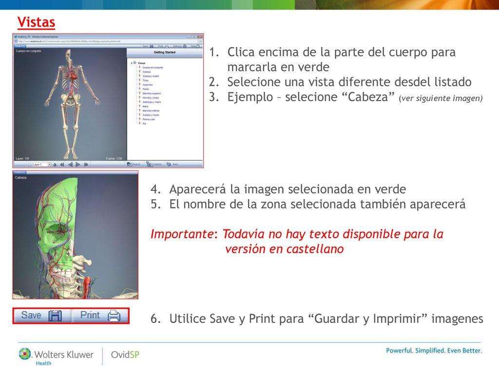 Primal - Fundamentos de Anatomía Guía de Usuario (v.1.0) - ppt descargar