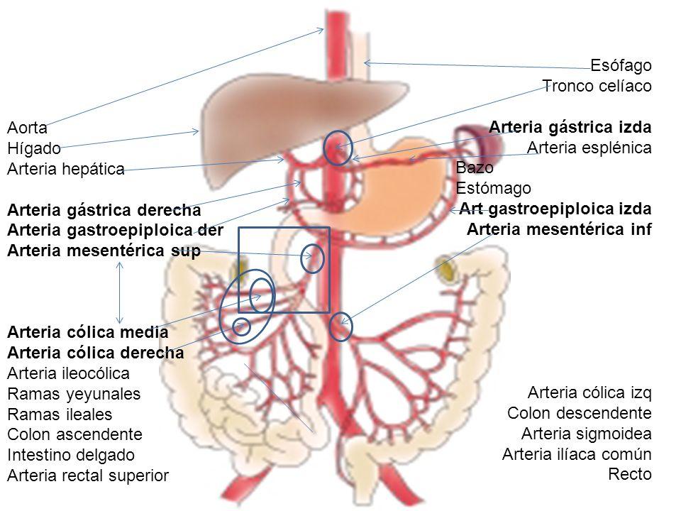 Trombosis mesentérica aguda y crónica - ppt video online descargar