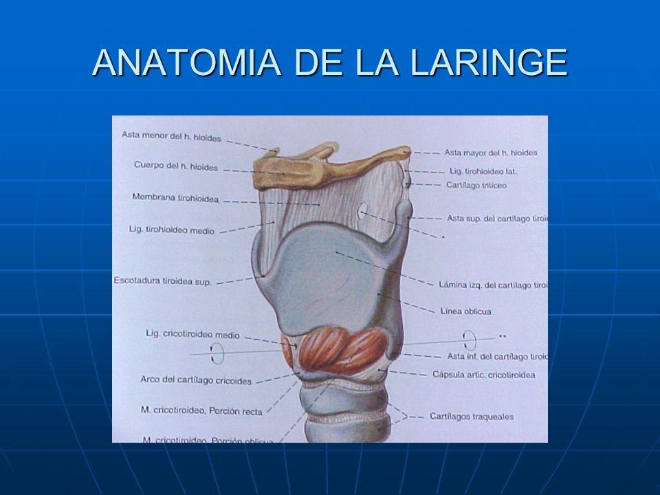 Tratamiento quirúrgico de la parálisis cordal - ppt descargar