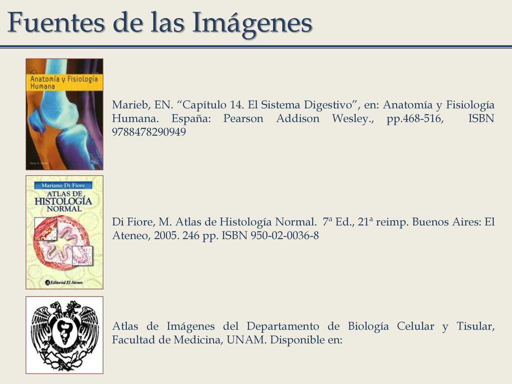 C. a Dra. Marcela Rojas Lemus - ppt descargar