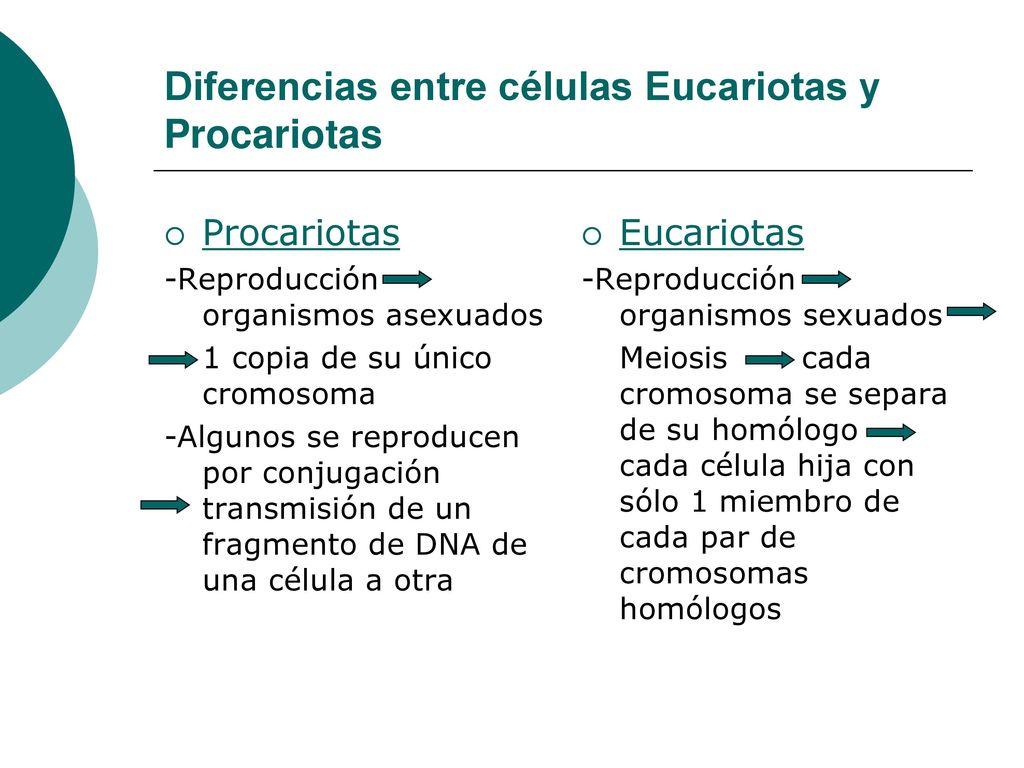 Que Diferencia Hay Entre Celulas Eucariotas Y Procariotas Esta Diferencia