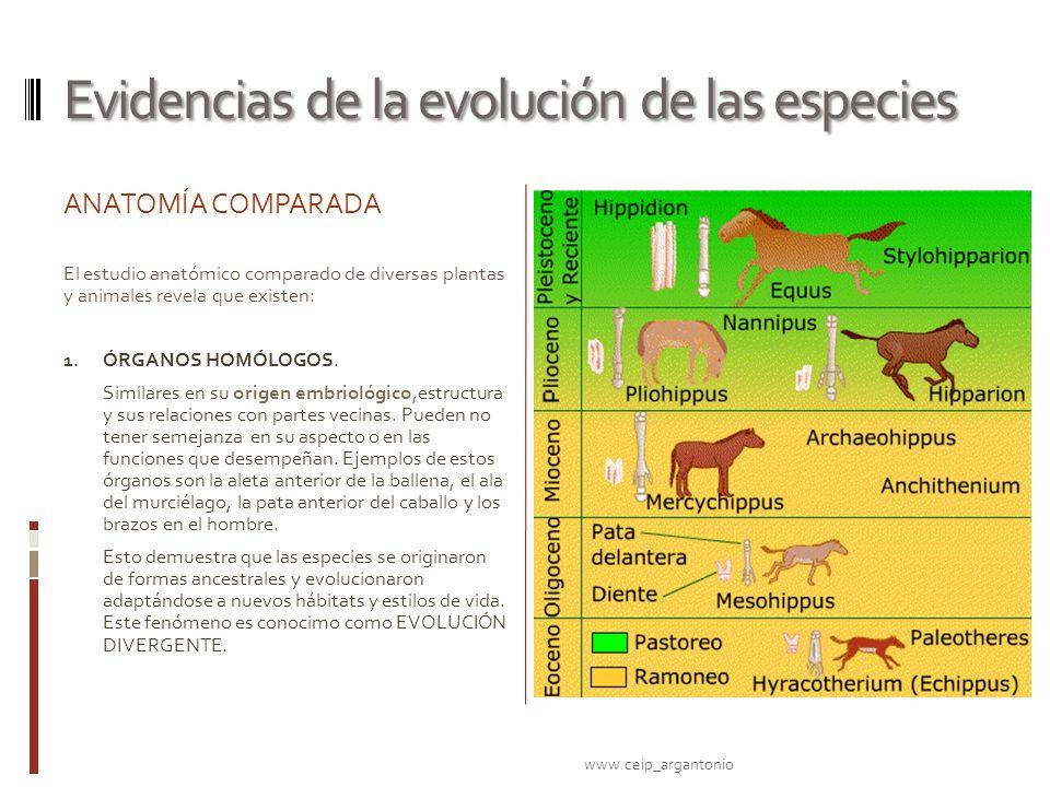 Lujoso Cómo La Anatomía Proporcionar Evidencia De La Evolución ...