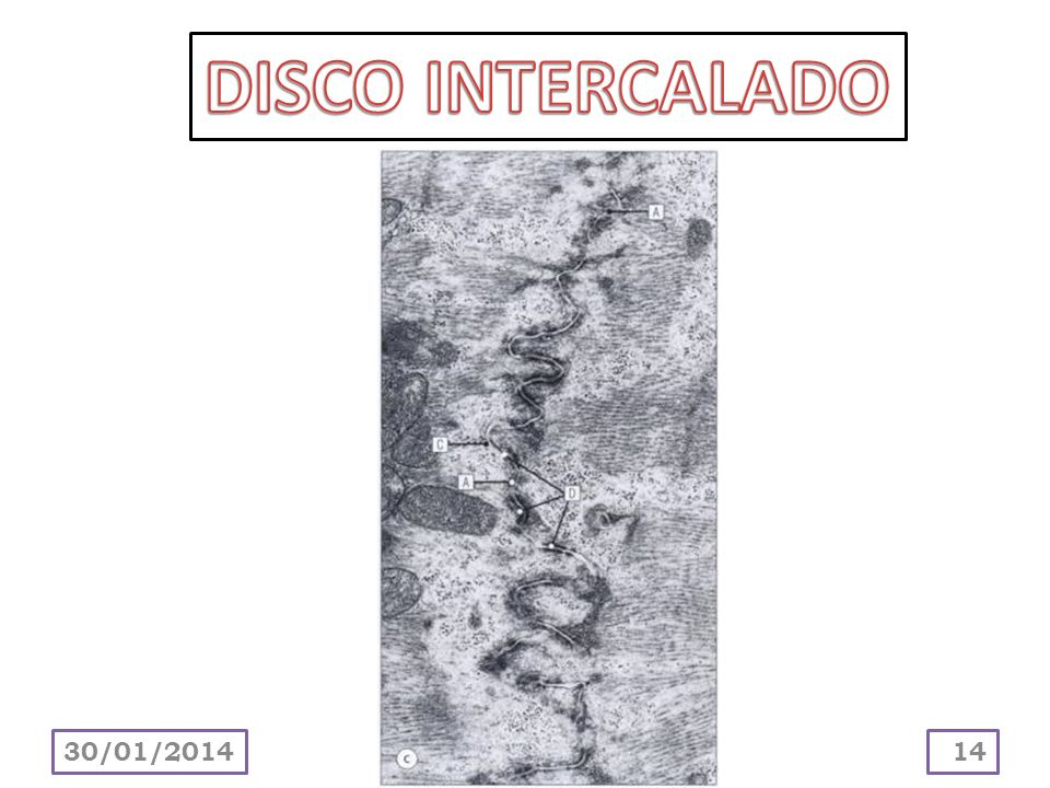 DISCO INTERCALADO 24/03/2017