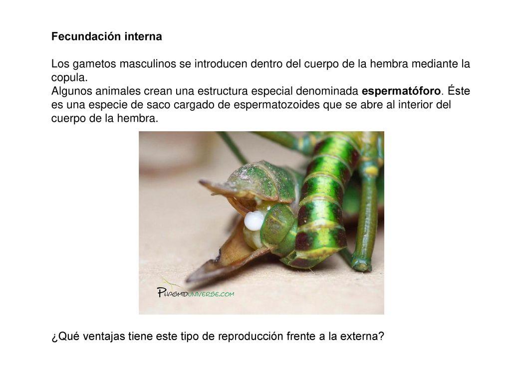Función de reproducción en animales - ppt descargar