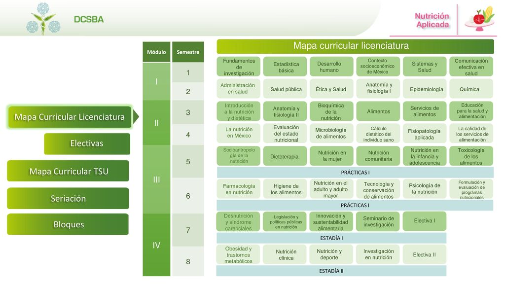 Mapa Curricular Licenciatura - ppt descargar