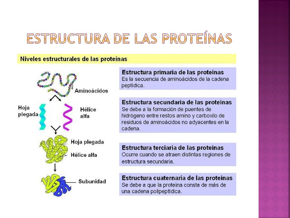Cátedra De Bioquímica Unne Ppt Video Online Descargar