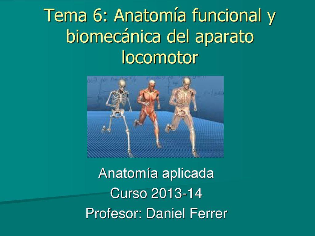 Tema 6: Anatomía funcional y biomecánica del aparato locomotor - ppt ...