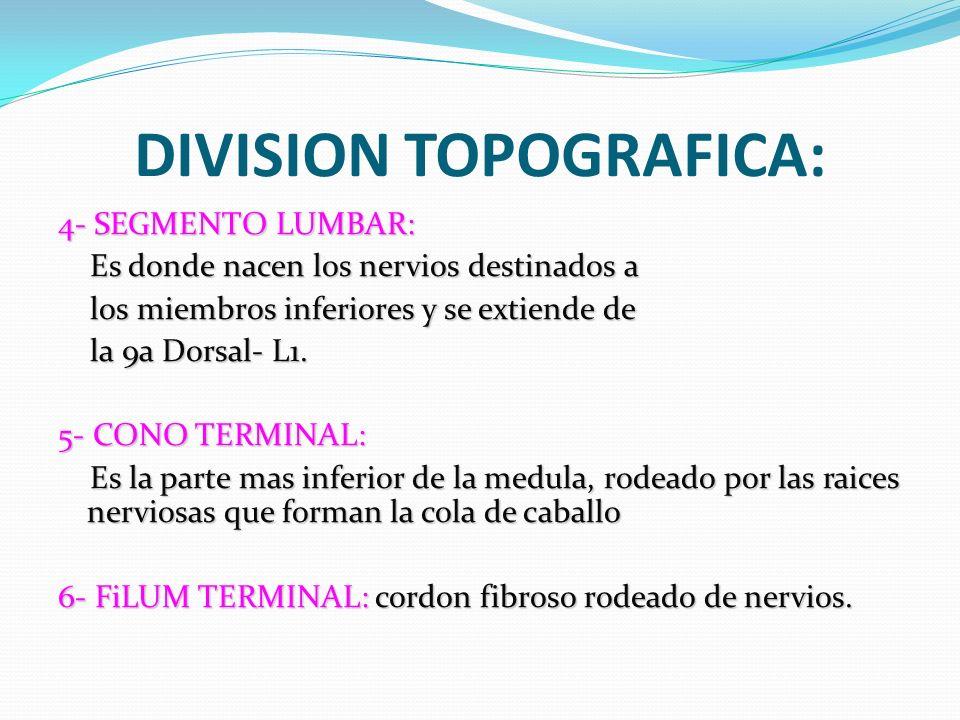 LESIONES DE MEDULA ESPINAL - ppt descargar