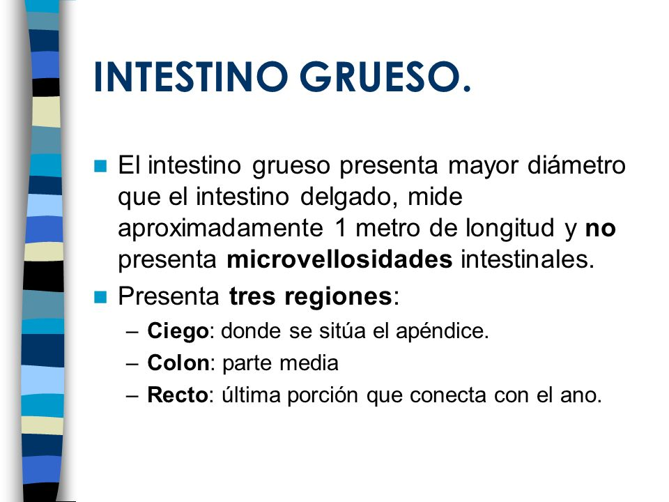INTESTINO GRUESO.